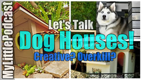 Dog House Ideas | Livestream | My Little Podcast