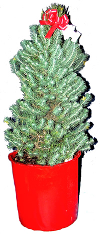 How to make a self water pot for s small potted christmas tree diy self watering pot christmas tree diy how to solutioingenieria Choice Image